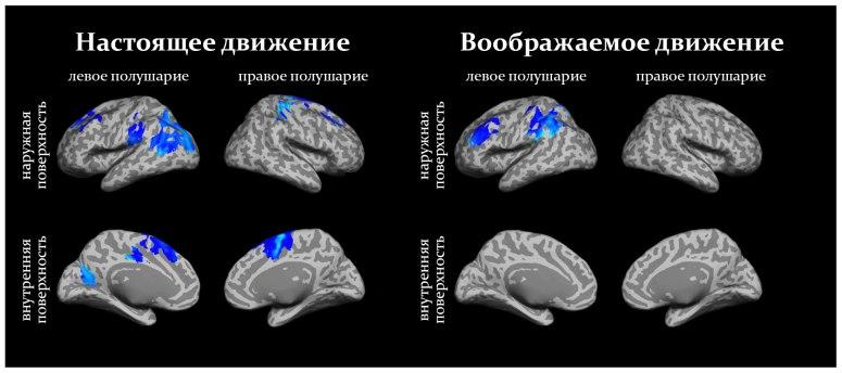 мозги-движения