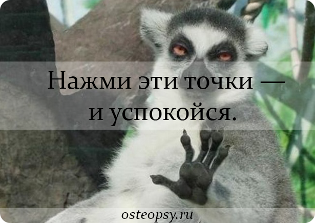 lemur-round.png